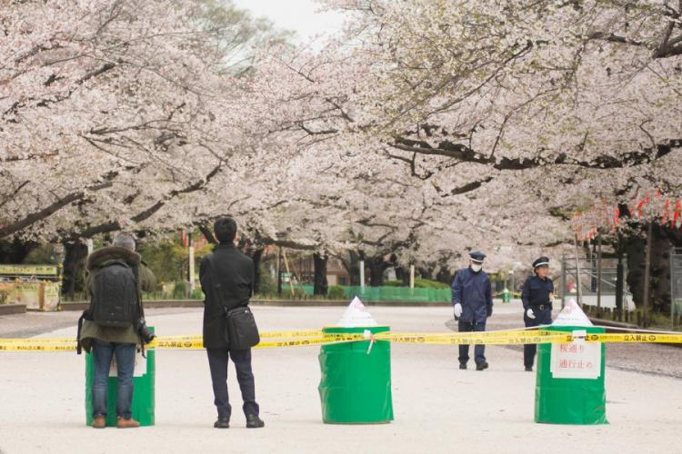 People check out cherry blossoms, which have been blocked off because of the coronavirus pandemic, at Ueno Park in Tokyo, Monday, March 30, 2020. AKIFUMI ISHIKAWA/STARS AND STRIPES