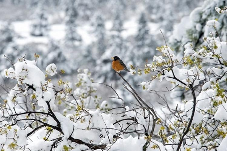 Some individuals suffer from Seasonal Affective Disorder (SAD), also referred to as Depressive Disorder. As the name suggests, it's a form of depression that occurs during the seasonal change to winter. (U.S. Air Force photo by Trevor Cokley)